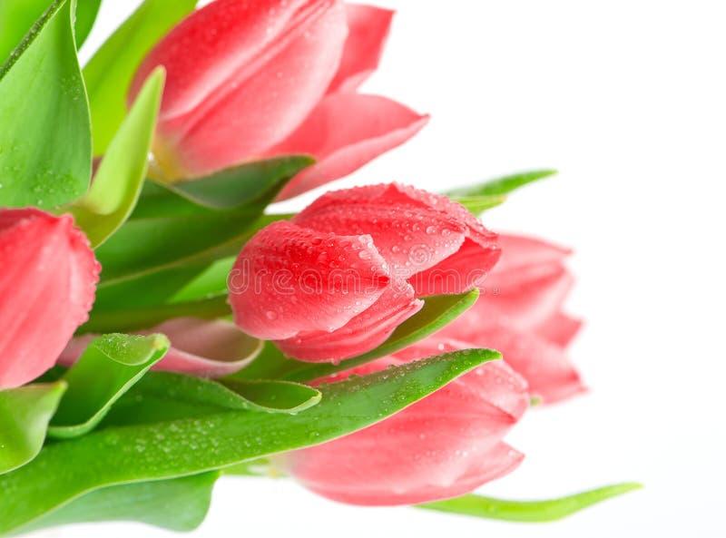 与水下落的美丽的桃红色郁金香花 库存照片