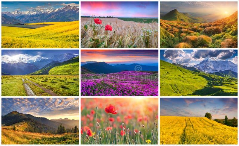 与9个五颜六色的夏天风景的拼贴画 免版税库存图片