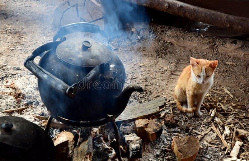 与水壶温暖的火的猫  免版税库存图片