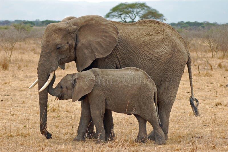 与婴孩的大象 免版税库存图片