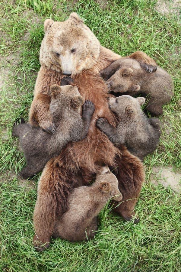 与婴孩的棕熊 免版税图库摄影