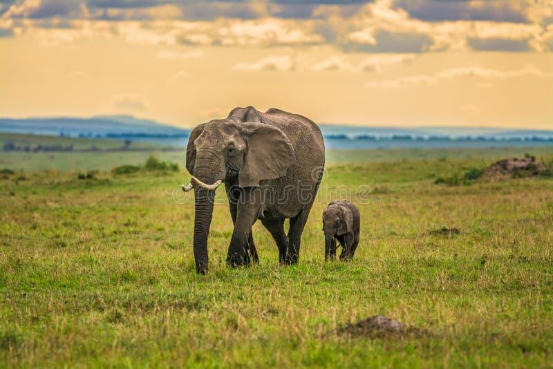 与婴孩的母亲大象 免版税库存照片