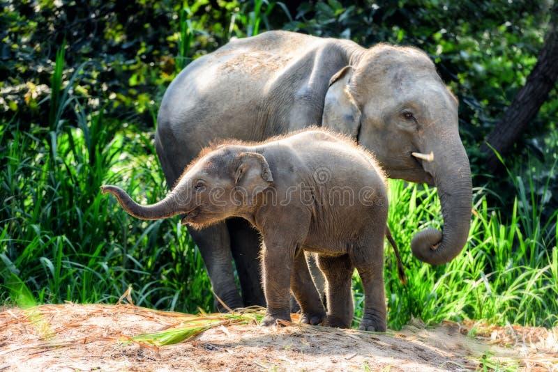 与婴孩的母亲大象 库存图片