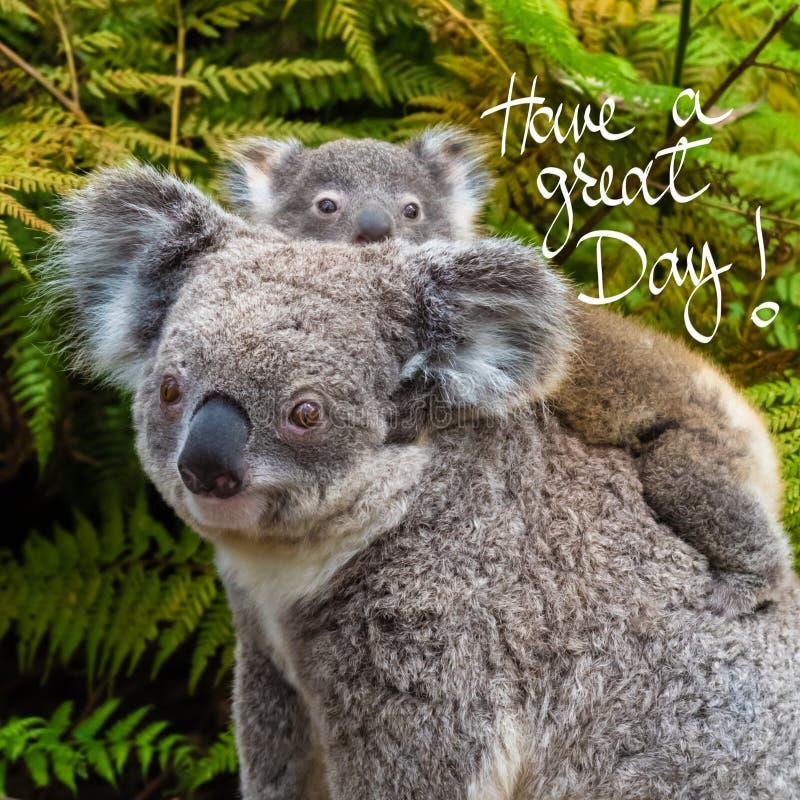 与婴孩的澳大利亚树袋熊当地动物和有了不起的天问候 免版税库存照片