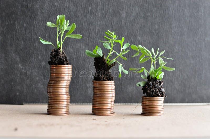 与年幼植物的硬币土壤的 现金上涨概念 免版税图库摄影