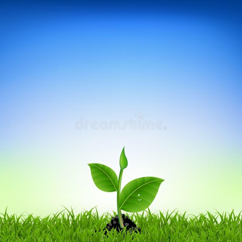 与年幼植物的绿草 库存例证