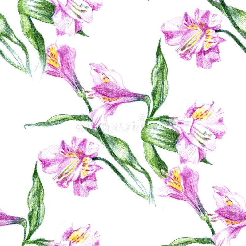 与水彩开花的桃红色花图画和铅笔剪影的无缝的背景样式  皇族释放例证