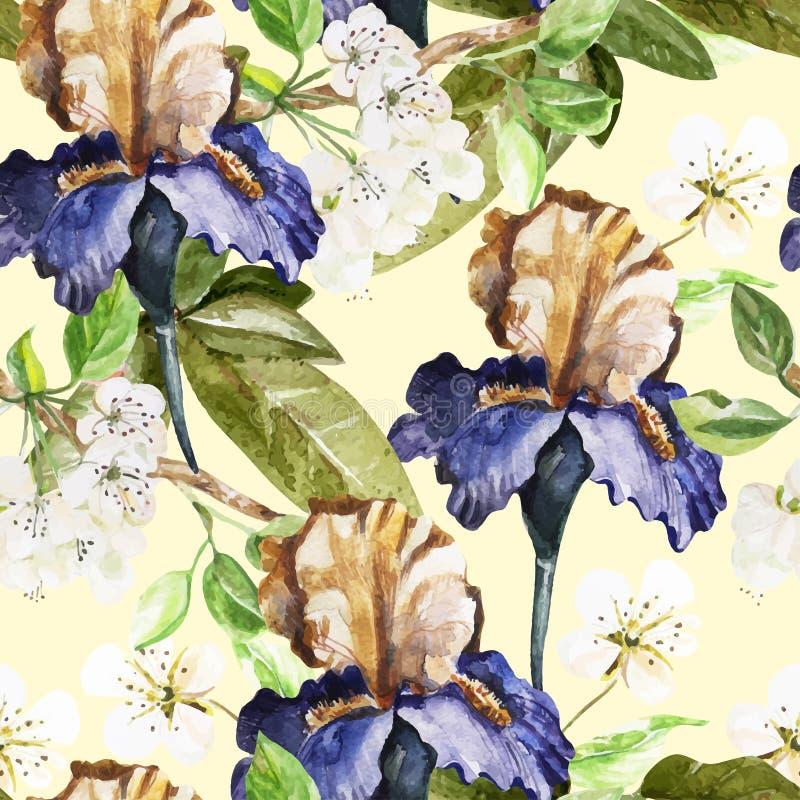 与水彩花的无缝的样式 虹膜 皇族释放例证