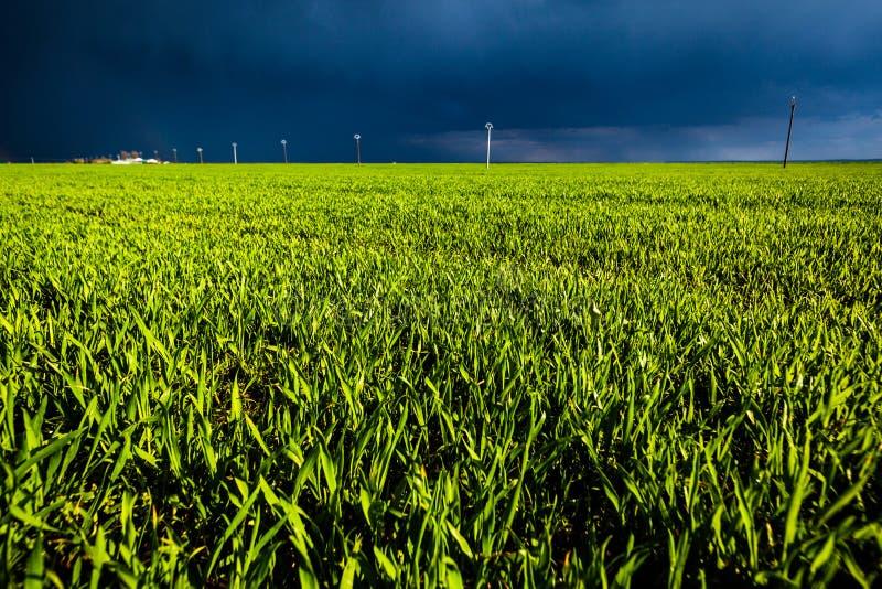 与黑暗的天空的麦地 免版税图库摄影