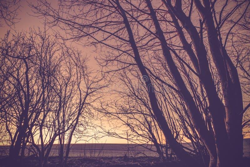 与黑暗的树剪影的乡下日落 免版税库存图片