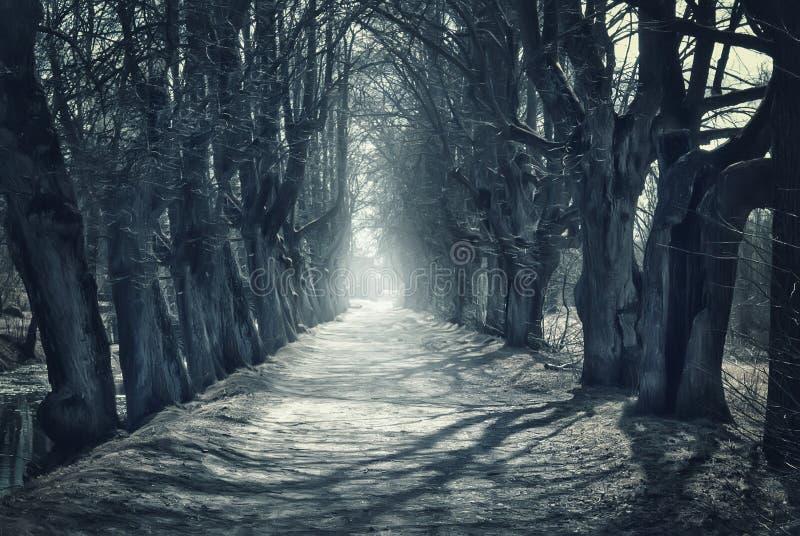 与黑暗的森林的万圣夜神秘的背景. 投反对票, 神秘.图片