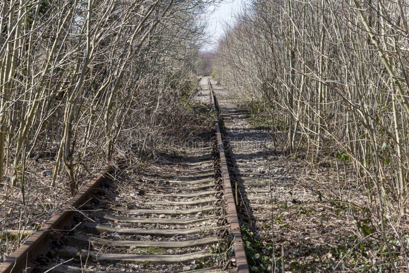 长得太大的铁路轨道 免版税库存图片