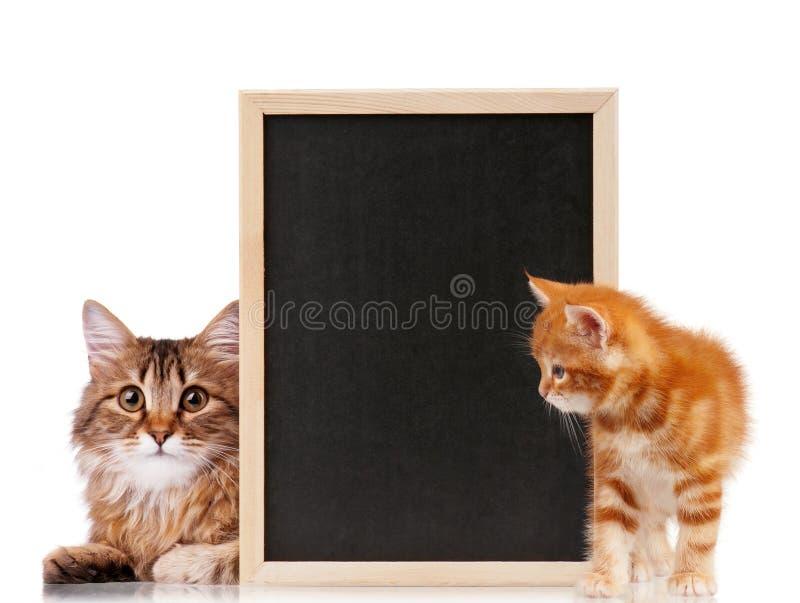 与黑板的猫 图库摄影