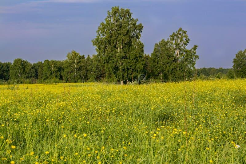 与结构树的夏天横向 库存图片