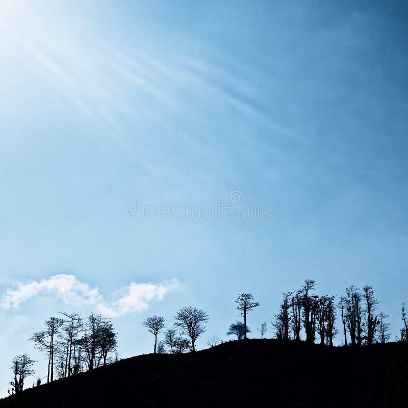 与黑树剪影的剧烈的背景在蓝天 免版税库存照片