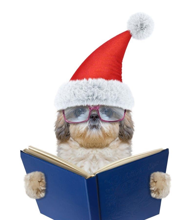 与玻璃的逗人喜爱的圣诞老人狗读书的 免版税图库摄影