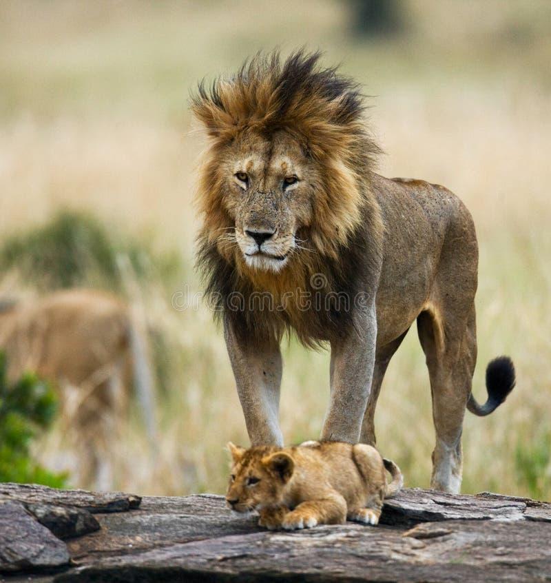 与崽的大公狮子 国家公园 肯尼亚 坦桑尼亚 mara马塞语 serengeti 免版税库存图片