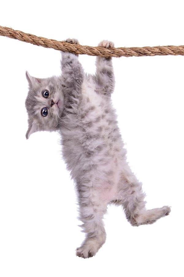 与绳索的小猫 免版税库存图片