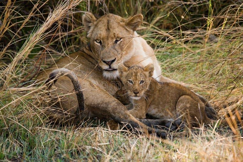 与崽的雌狮 Okavango Delta 免版税库存图片