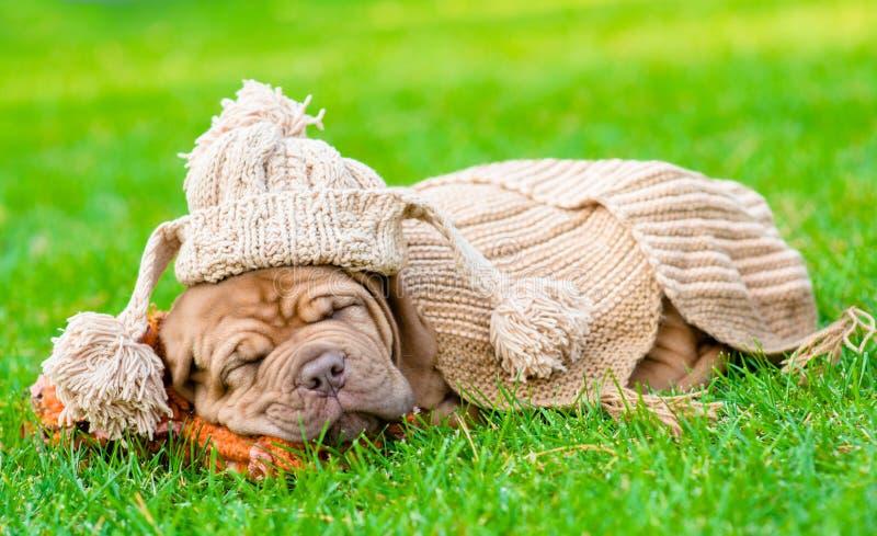 与滑稽的帽子的小狗睡觉在草的 免版税库存图片