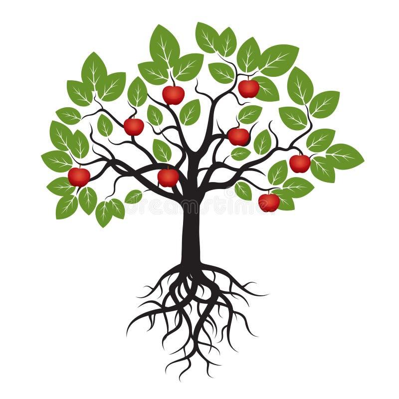与绿色叶子、根和红色苹果计算机的树 库存例证