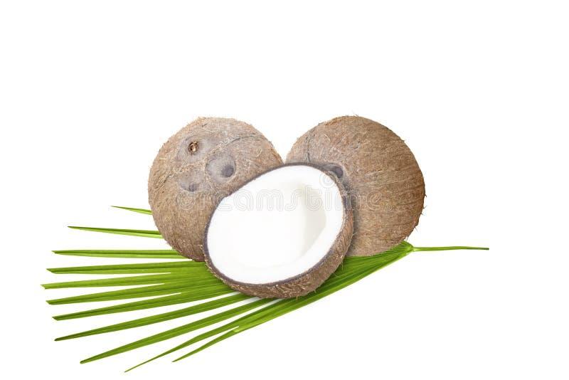 与绿色叶子的椰子在白色背景 免版税库存照片