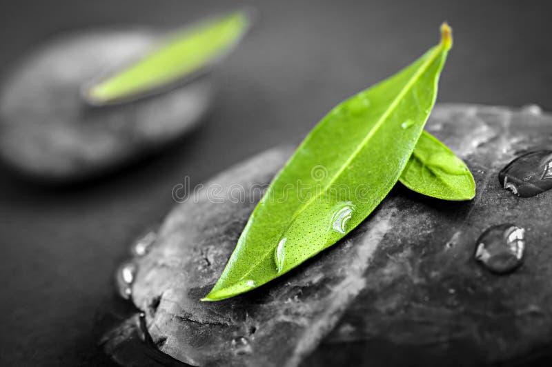 与绿色叶子的石头 免版税库存照片