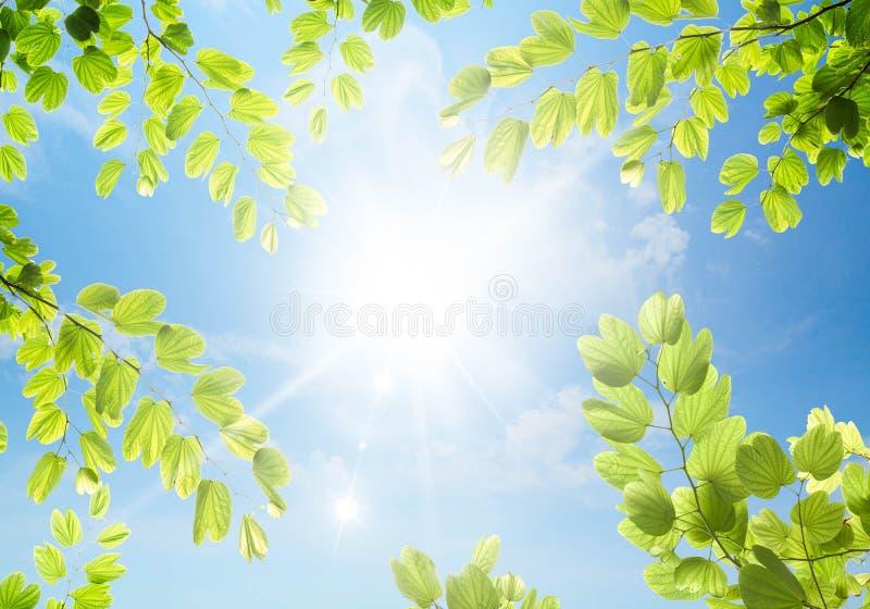 与绿色叶子的秀丽平安的天空 免版税库存图片