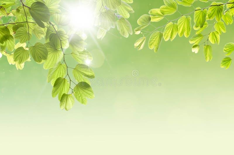 与绿色叶子的秀丽平安的天空 库存照片