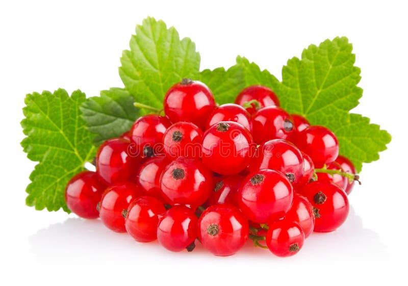 与绿色叶子的红浆果 图库摄影