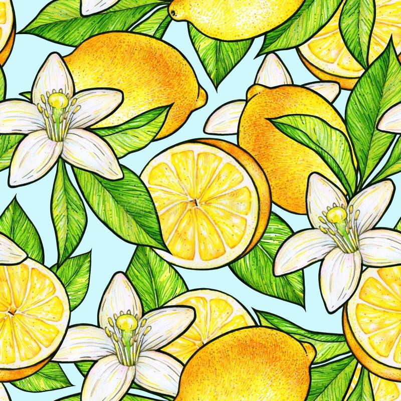 与绿色叶子的美丽的黄色柠檬果子和白花柑橘在蓝色背景 花柠檬乱画图画 Seamles 向量例证