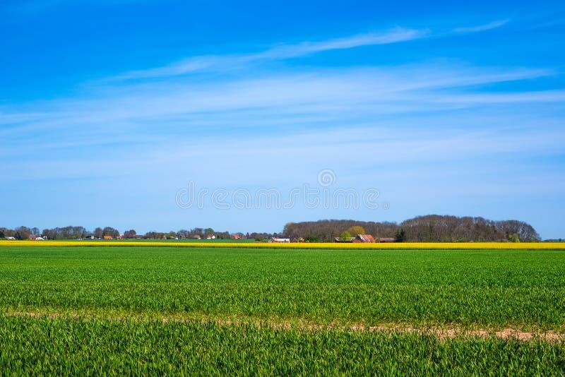 与绿色和黄色领域的风景 免版税图库摄影