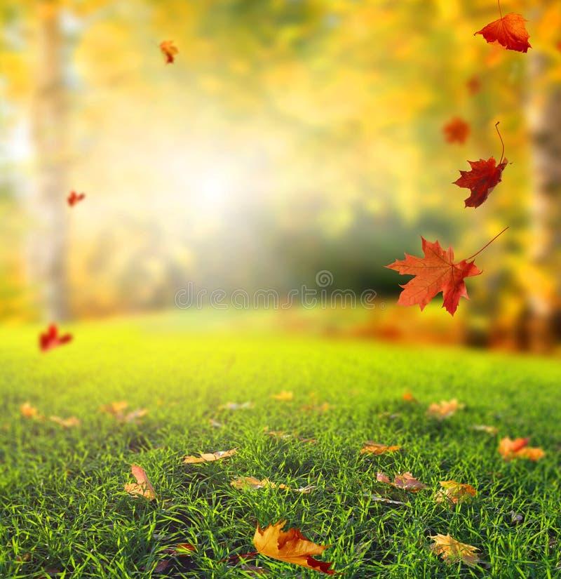 与黄色树、绿草和太阳的美好的秋天风景 免版税库存图片