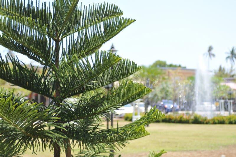 与绿色树的图片 免版税库存图片