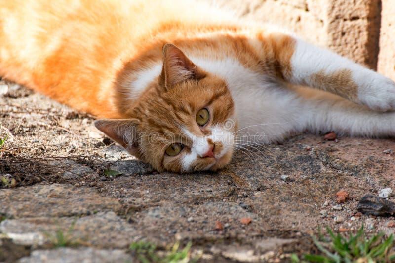 与黄色毛皮III的猫 库存照片