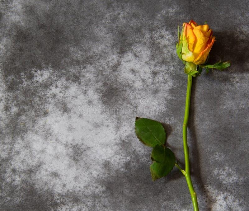与黄色玫瑰的吊唁卡片 免版税库存照片