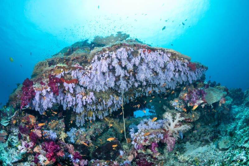 与紫色珊瑚的五颜六色的热带礁石 库存图片