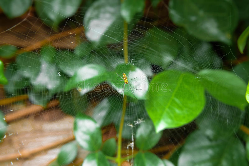 与绿色的小的黄色蜘蛛离开背景 库存图片