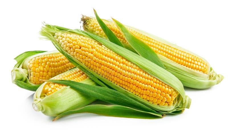 与绿色的新鲜的玉米离开静物画菜 免版税库存图片