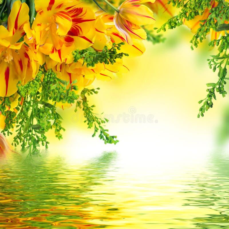 与绿色的红色郁金香 图库摄影