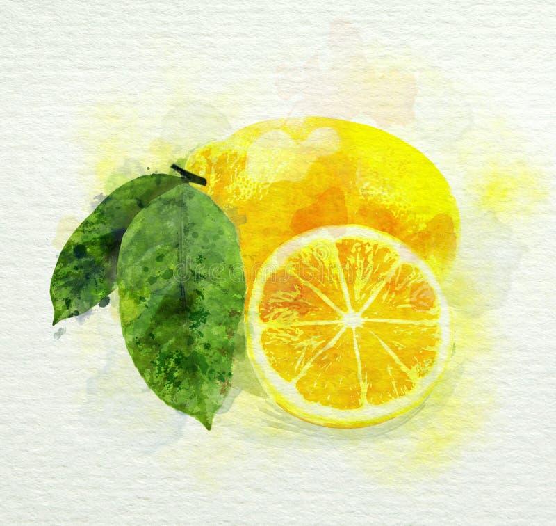 与绿色的黄色柠檬离开水彩绘画 皇族释放例证