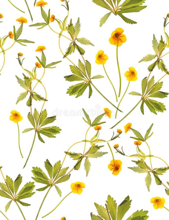 与黄色花的无缝的花卉样式 库存照片