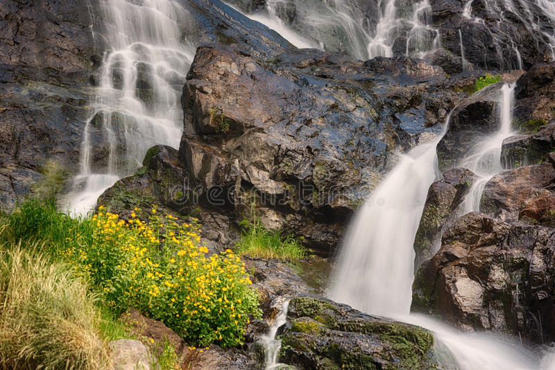 与黄色花,黑森林,德国的Todtnauer瀑布 库存图片