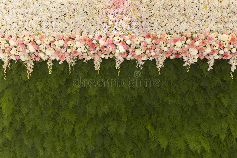 与绿色蕨的美丽的花离开墙壁背景Beautif 免版税库存图片