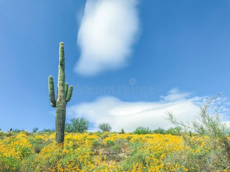 与黄色野花的柱仙人掌仙人掌 免版税库存照片