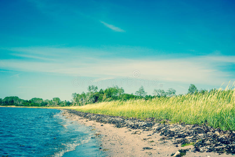 与绿色领域和蓝天的海滩 免版税库存照片