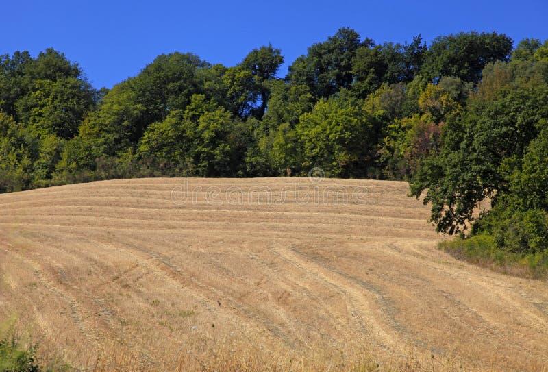 与黄色领域的托斯卡纳农村风景,意大利 免版税库存照片