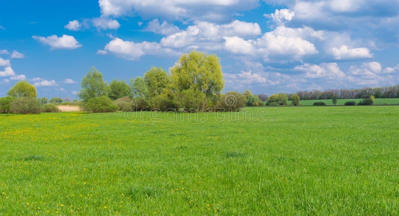 与水草甸的风景春季的 库存图片