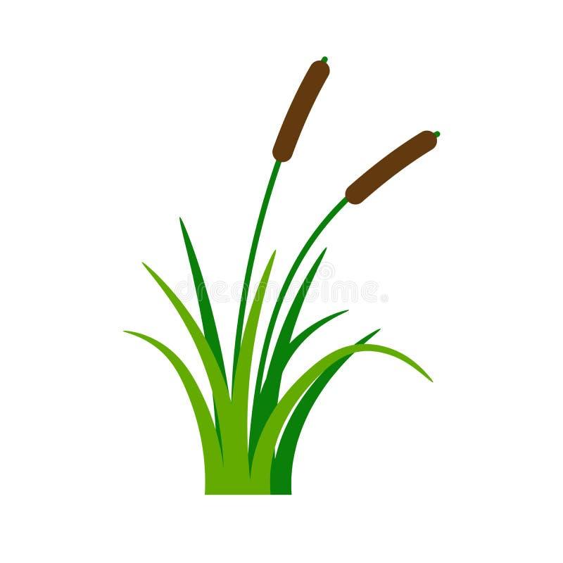 与绿草的布什纸莎草 向量例证