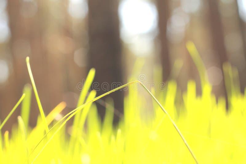 与绿草的抽象夏天风景在锋利森林背景/迷离  免版税库存照片